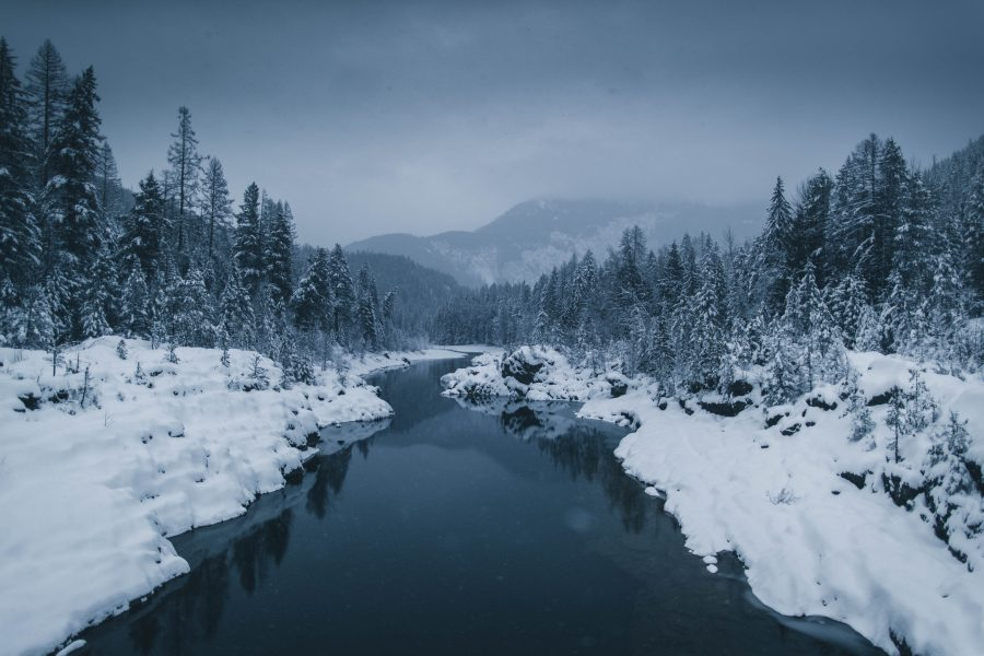 river surrounded by snow covered field with pine trees